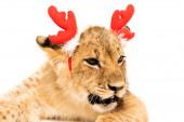 Nahaufnahme von niedlichen Löwenjungen in Rothirschhörnern Stirnband isoliert auf weiß