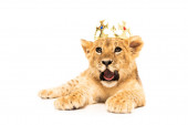 cute lion cub in golden crown isolated on white
