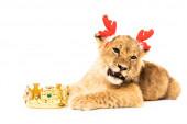 aranyos oroszlán kölyök szarvas szarvas szarv fejpánt közel arany korona elszigetelt fehér