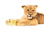 roztomilé lví mládě poblíž zlaté koruny izolované na bílém