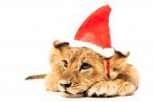aranyos oroszlán kölyök télapó kalap elszigetelt fehér