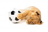 roztomilý lev mládě v blízkosti fotbalového míče izolované na bílém