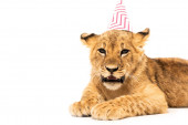 cute lion cub in party cap isolated on white