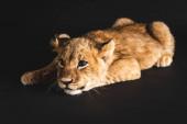 rozkošné lví mládě ležící izolované na černé