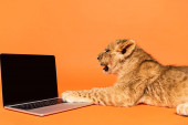 side view of cute lion cub lying near laptop with blank screen on orange background