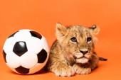 aranyos oroszlán kölyök feküdt közelében focilabda narancs háttér