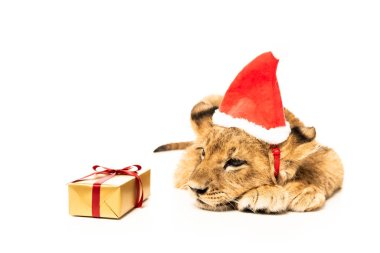 Cute lion cub in santa hat near golden gift isolated on white stock vector