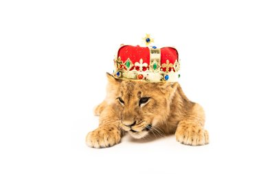 cute lion cub in golden and red crown isolated on white