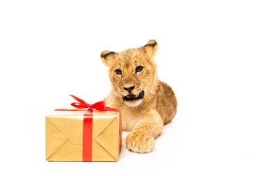 Cute lion cub near golden gift with red ribbons isolated on white stock vector