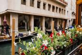 selektivní zaměření květin a starobylé budovy na pozadí v Benátkách, Itálie