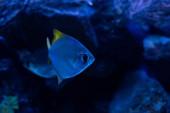 halak úsznak víz alatt sötét akváriumban kék világítással