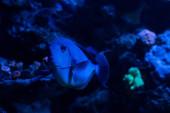 Fényképek halak úsznak víz alatt az akváriumban kék világítással