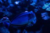 Photo fish swimming under water in aquarium with blue lighting