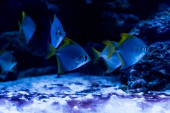 Photo fishes swimming under water in aquarium with blue lighting