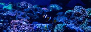 Fish swimming under water in aquarium with corals, panoramic shot stock vector