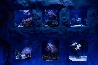 Fishes swimming under water in aquariums in oceanarium stock vector