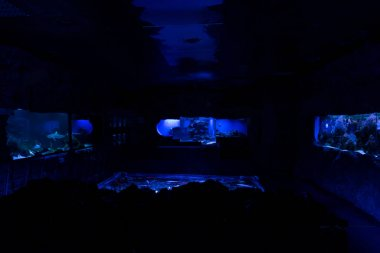 Fishes swimming under water in aquariums with blue lighting in oceanarium stock vector