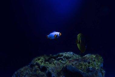 Fishes swimming under water in dark aquarium stock vector