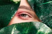 levágott kilátás a lány rózsaszín szemhéjpúder a szem zöld levelek