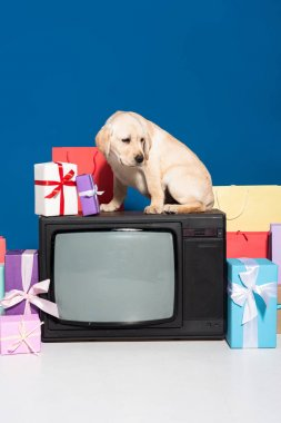 Golden retriever puppy on vintage tv near gifts and purchases on blue background stock vector