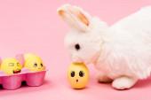 Fényképek Húsvéti nyuszi és színes csirke tojás arckifejezések rózsaszín háttér