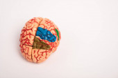 High angle view of colored parts on brain model on white background