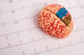Selektivní zaměření modelu mozku s barevnými částmi na elektrokardiogramu izolovaném na bílém