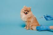 levágott kilátás állatorvos latex kesztyű gazdaság fecskendő és így vakcinázás köpködő kutya kék