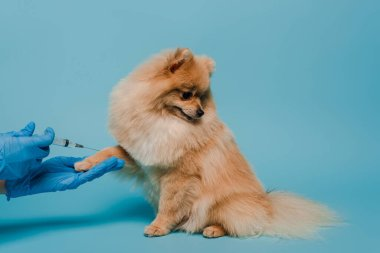 Cropped view of veterinarian in latex gloves holding syringe and making vaccination for dog on blue stock vector
