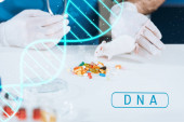 Photo cropped view of veterinarian in latex gloves near white mouse, capsules and petri dish on desk, dna illustration