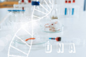 Photo selective focus of white mouse near syringe, petri dish with blood sample and containers with medicines, dna illustration
