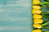 top view of yellow tulips on blue textured surface, mothers day concept