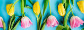 panoramic shot of blooming yellow and pink tulips on blue, mothers day concept
