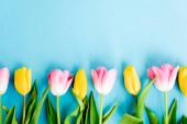pohled shora na rozkvetlé žluté a růžové tulipány na modré, koncept dne matek
