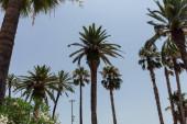 Nízký úhel pohledu na kvetoucí rostliny a palmy s modrou oblohou na pozadí