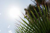 Dolní pohled na větve palem se sluncem a modrou oblohou na pozadí