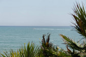Selective focus of boat in sea and branches of palm trees on coast in Catalonia, Spain