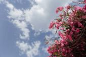 Lényegében kilátás rózsaszín virágzó növény felhős ég a háttérben