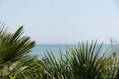 Selective focus of branches of palm trees with seascape and sky at background in Catalonia, Spain