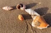 A kagylók szelektív fókusza a nedves homokra a tengerparton