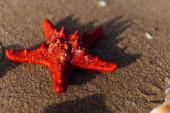 Selektivní zaměření červené hvězdice na písek na pláži