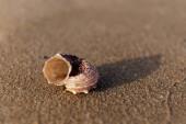 Selektivní zaměření mušle na mokrý písek na pláži