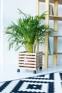 potted plant in vase with wooden flower stand and shelves at modern room