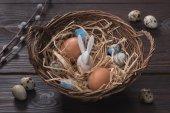 Fotografie vysoký úhel pohled kuřata a křepelky velikonoční vajíčka a králíka v hnízdě