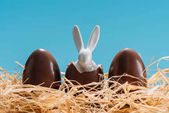easter bunny in chocolate eggs on straw isolated on blue