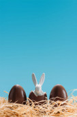 delicious chocolate eggs with eater bunny in nest isolated on blue