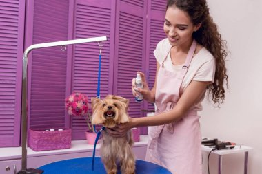 groomer grooming dog