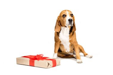 dog with present box
