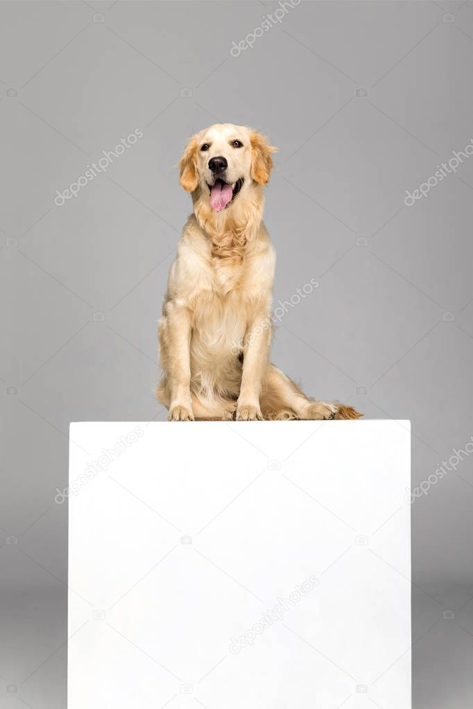 dog with empty blank
