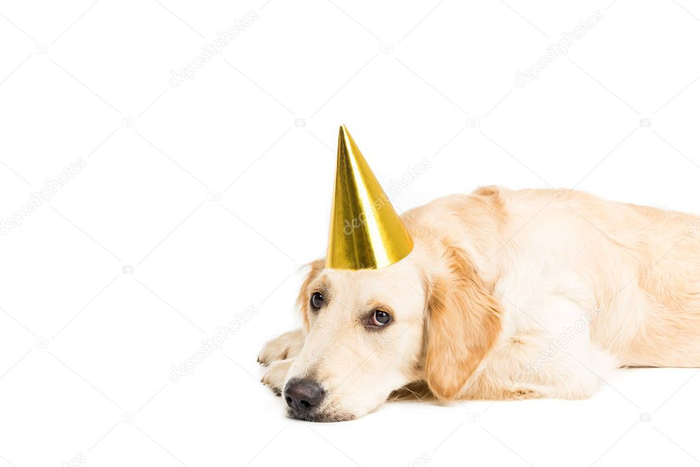 sad dog in party hat
